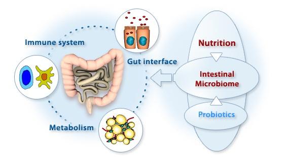 Cómo estabilizar muestras para estudio del microbioma intestinal