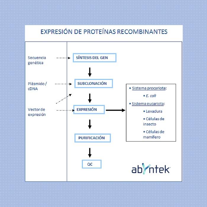 expresion-de-proteinas-recombinantes