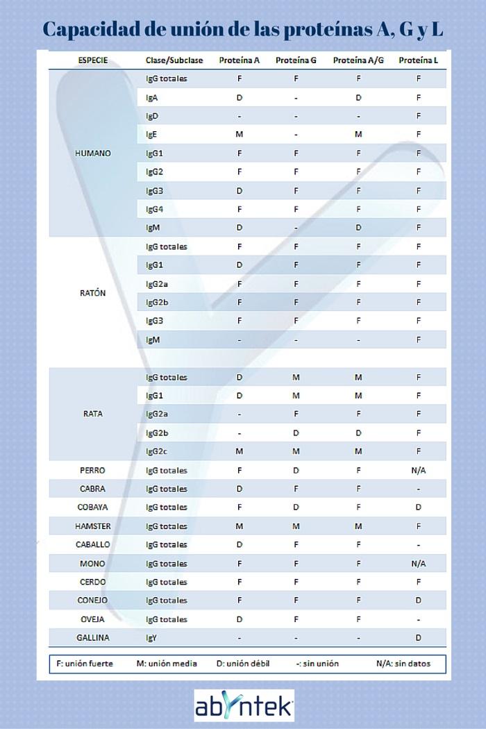 metodos-de-purificacion-de-anticuerpos-union-proteinas-a-g-l