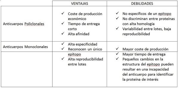 produccion-de-anticuerpos-monoclonales-y-policlonales-ventajas