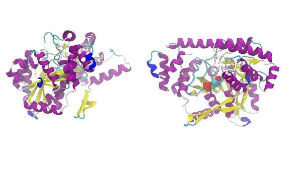 Factores clave en la expresión de proteínas recombinantes