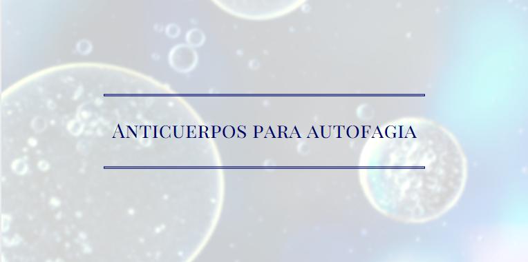Anticuerpos para Autofagia