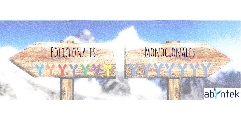 Diferencias entre anticuerpos monoclonales y policlonales