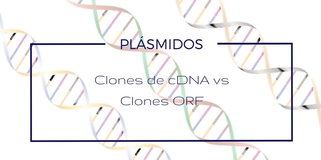 Plásmidos: Clones de cDNA vs Clones ORF