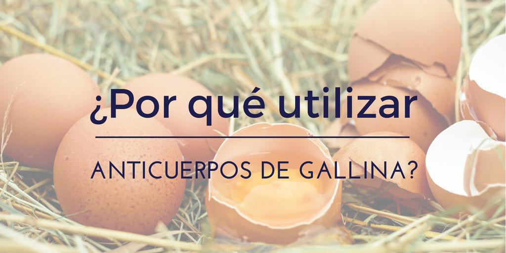 5 razones para utilizar anticuerpos de gallina