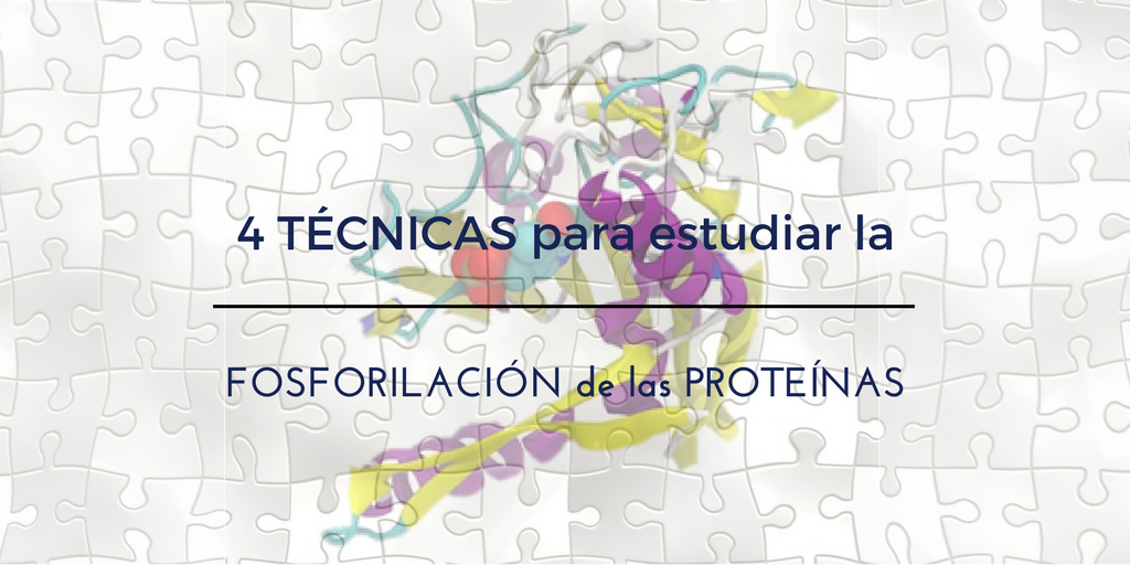 4 Técnicas para estudiar la Fosforilación de las Proteínas