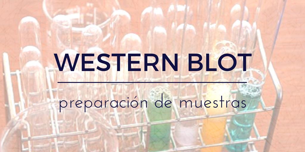Preparación de muestras para western blot