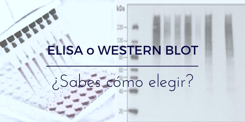 Western Blot o ELISA, ¿cómo elegir?