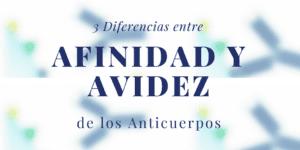Diferencias entre afinidad y avidez de los anticuerpos