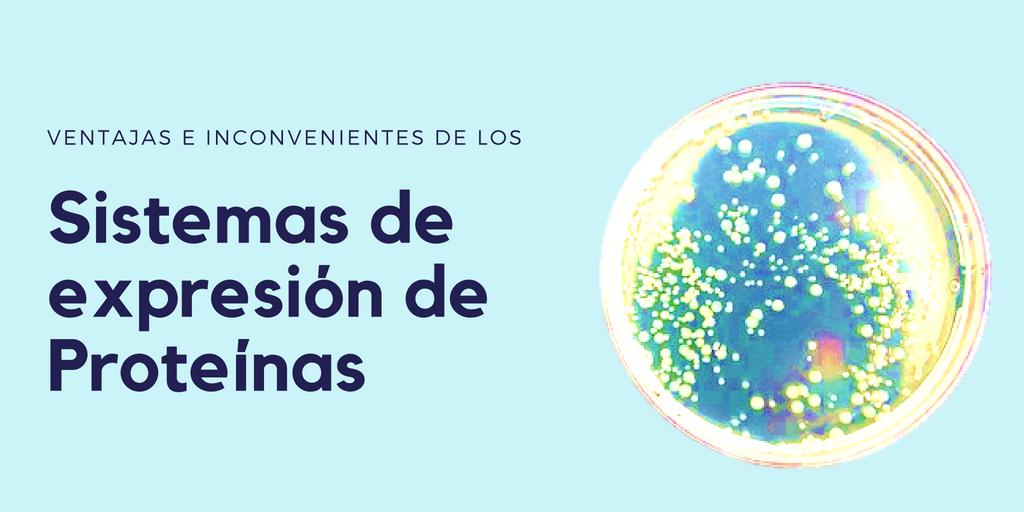 Sistemas de expresión de proteínas recombinantes