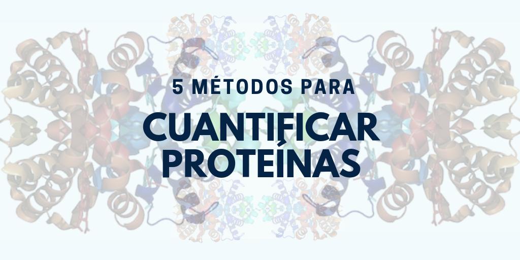 5 métodos para cuantificar proteínas