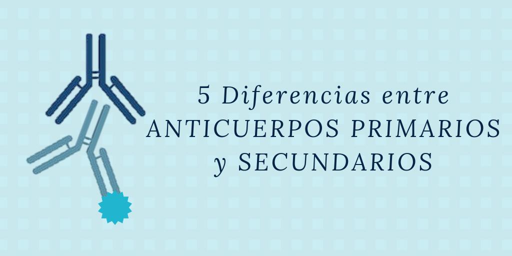 Diferencias entre anticuerpos primarios y secundarios
