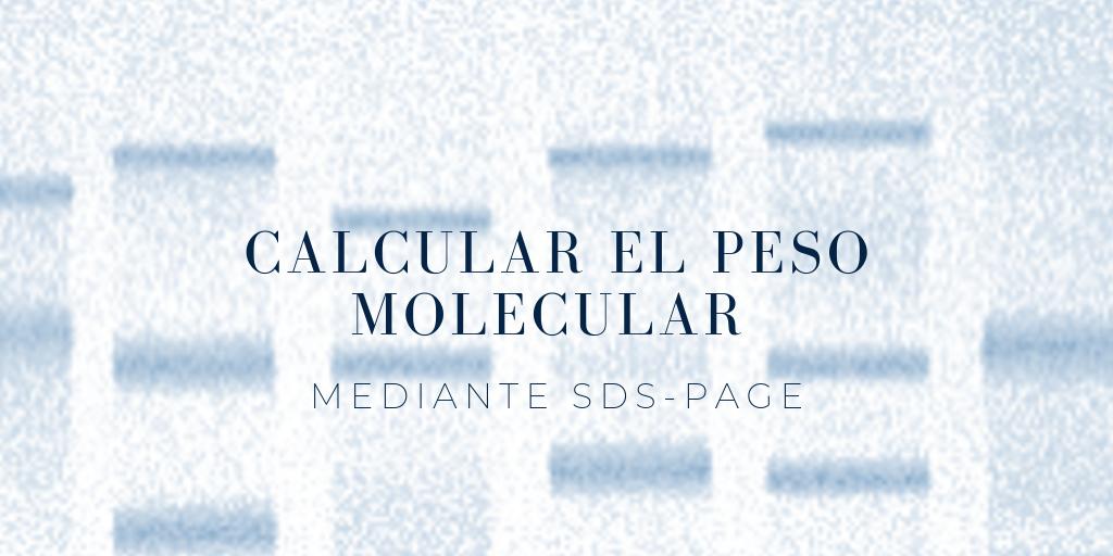 calcular el peso molecular de una proteína