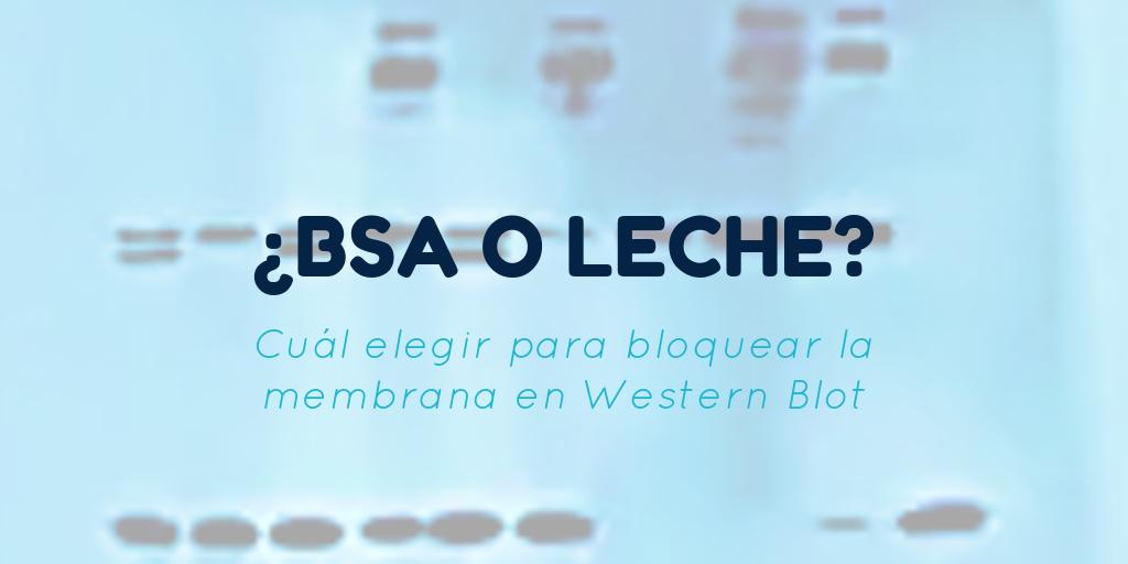 BLOQUEO DE LA MEMBRANA EN WESTERN BLOT: ¿BSA O LECHE?