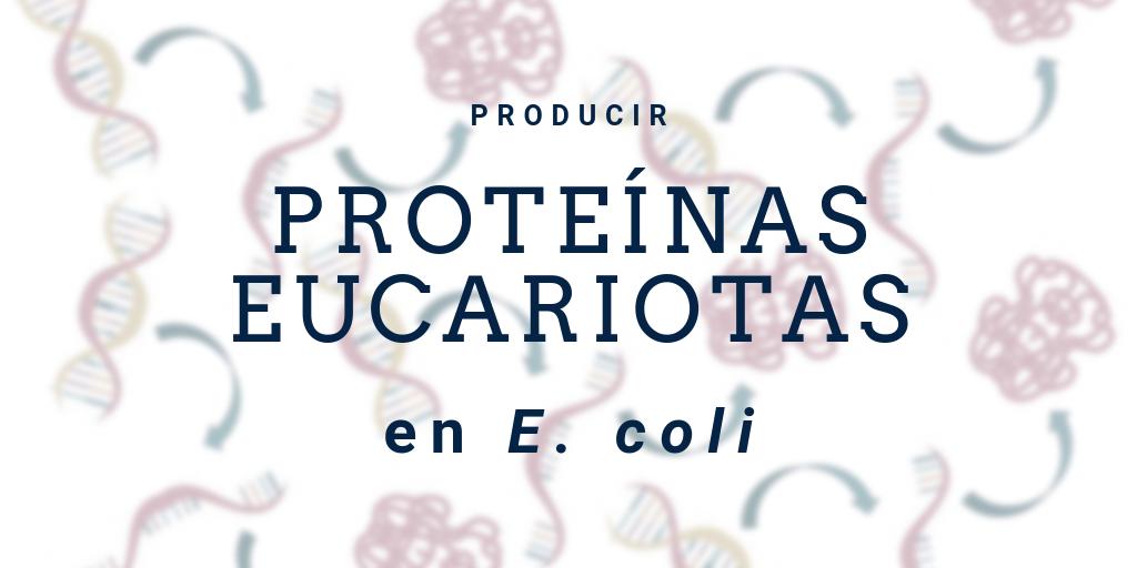 ¿Cómo expresar proteínas eucariotas en E. coli?