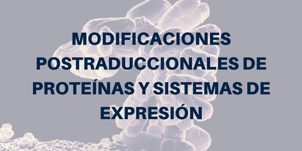 Modificaciones postraduccionales de proteínas y sistemas de expresión