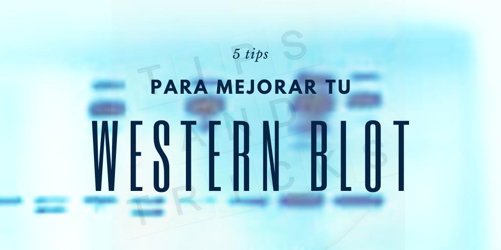 5 tips para mejorar tus resultados de Western Blot