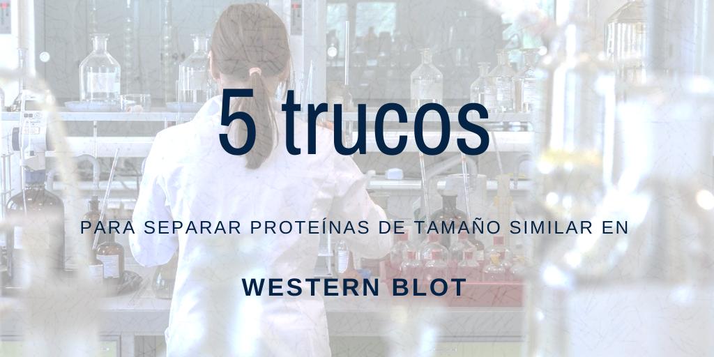 5 trucos para separar proteínas de tamaño similar en Western Blot