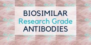 Biosimilar research grade antibodies