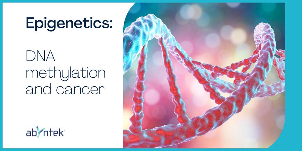 Epigenetics: DNA methylation and cancer
